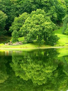 Green Reflection by Stanley Zimny, via Flickr #reflection