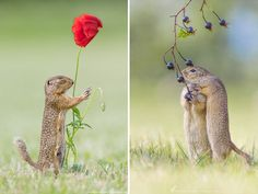Henrik Spranz is a German Nature Photographer living in Austria. He's a software developer with a passion for landscape and macro photography, and it's these latter images that have captured our attention. Henrik takes colourful images of small rodents (like European ground squirrels) in their natural habitat and captures the innocent and sometimes funny life of the little creatures.