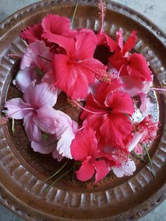 Pin By Awa Tessa On Dli Amazing Flowers Beautiful Flowers Flowers