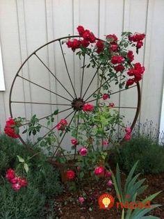 Wagon Wheel as Trellis / Garden Art Wagon Wheel als Spalier- / Gartenkunst von OSU Master Gardener, Diy Trellis, Trellis Design, Garden Trellis, Trellis Ideas, Rose Trellis, Garden Planters, Clematis Trellis, Porch Trellis, Balcony Gardening