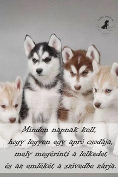 Husky, Pets, Animals, Animals And Pets, Animales, Animaux, Animal, Husky Dog, Animais