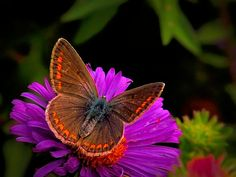 Butterfly on the Flower - OGQ Backgrounds HD