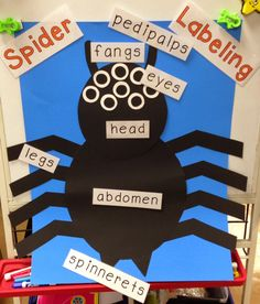 Another fun week in October!! This week was all about Spiders !! We had a fun, jam packed week with lots and I mean LOTS of activities abo...