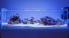 "reef-aqua-design: ""daletu's ADA Shallow Reef from nano-reef. This is a great example of beautiful reef scaping,. Cool Fish Tanks, Saltwater Fish Tanks, Saltwater Aquarium, Aquarium Fish Tank, Freshwater Aquarium, Aquarium Sump, Coral Reef Aquarium, Marine Aquarium, Seahorse Aquarium"