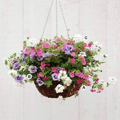 Soft hues create a romantic look in this beautiful hanging basket. See more flower inspiration: http://www.bhg.com/gardening/container/plans-ideas/plant-combinations-to-create-stunning-hanging-baskets/?socsrc=bhgpin050813romanticbasket=24