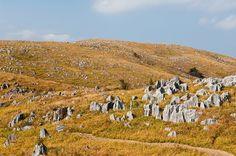 【山口県 秋吉台】500~600m級の山脈に囲まれた、盆地状の台地。台地面の標高180~420m、主として古生代の石灰岩からなり、台地の地下には雨水によって侵食された鍾乳洞が多数散在しています。国の特別天然記念物に指定されています。 http://www.oidemase.or.jp/db/a/detail.php?id_num=35462aa0000004495 #Yamaguchi_Japan #Setouchi