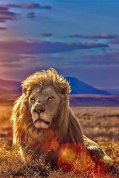 Best Positive Quotes : Learn to fight alone. Learn To Fight Alone, Animals And Pets, Cute Animals, Best Positive Quotes, Positive Thoughts, Deep Thoughts, Majestic Animals, African Animals, Beautiful Cats