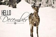 Hello December - Miss M