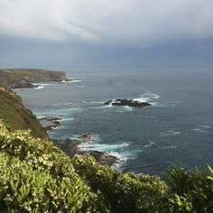 View from the cliff top en route to Bushranger's Bay Personal Photo, Cliff, Wander, My Photos, Crafty, World, Top, Outdoor, The World