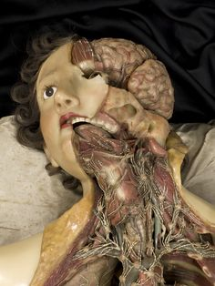 Morbid Anatomy: Wax Anatomical Model of a Female Showing Internal Organs, Francesco Calenzuoli, Florence, 1818; Wellcome Collection at the Science Museum #anatomy #anatomical #girl #brain #waxmodel #medical #dummy #guts #curiosity