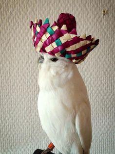 Just a bird wearing a sombrero - Imgur