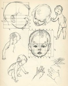 Drawing a Baby's Head in the Correct Proportions