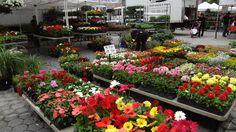 ユニオンスクエアマーケットの花