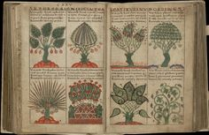 These images come from the fabled manuscript, 'Liber Floridus' (Book of Flowers), a Medieval encyclopædia produced some 900 years ago by Lambert, Canon of St Omer, in the NE France/Flanders/Belgium region.