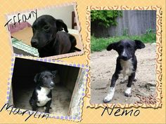 I Dimenticati - http://hormiga.it/i-dimenticati/ Adoption, Adozioni Cani, Adozioni urgentissime, Bellissimi Black Dog