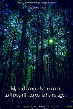 Forest, Woods, Spiritual, Pagan, Celtic Tree Lore, Nature Love <3