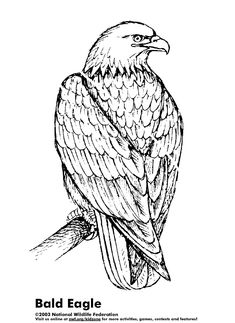 3D Coloring Pages For Adults | ... of an eagle resting online ...