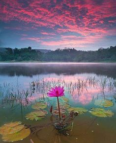 Out of the mud the lotus will grow