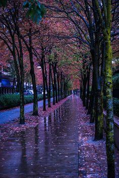 We Love Rain /// Tumblr