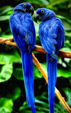 Blue Bird's of Happiness