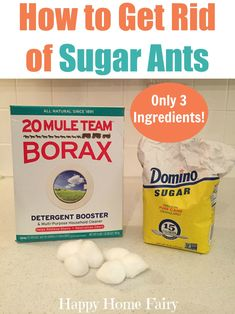 How To Get Rid Of Sugar Ants With Just 3 Ingredients!