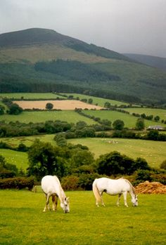 Google Image Result for http://www.intangibility.com/Photography/Travel/Ireland99/Day3/247_horses2.jpg