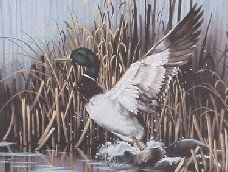 Greenhead Getaway. Oil Painting. (Cassandra Graham) Duck Art, Wildlife Paintings, Mallard, Bird Art, Bald Eagle, Graham, Birds, Oil, Animals