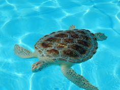 Das Schildkrötenkrankenhaus in Florida, wie ein Ausflug den Tieren hilft.