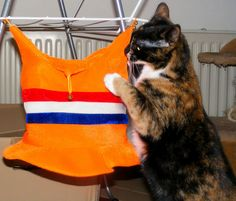 Kitty and the Oranje Hat :)