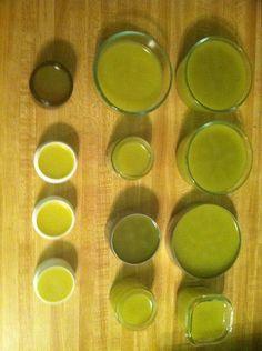 Homemade Calendula & Lemon Balm Salve Recipe