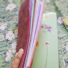 Just made myself an Herbarium insert for my pink Raydori. I am also an herbalist and I like to go around discovering what plants are in my places.  #mynature #raydori #midoritravelersnotebook #fauxdori #handmade #diy #doityourself #naturelovers #flowers #flowerpower #herbs #beautyaround #planning #creativity