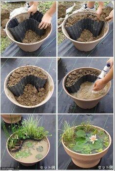 How to grow a tiny pond plants step by step DIY tutorial instructions / How To Instructions