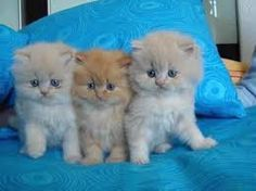 beautiful cats - Pesquisa Google
