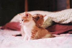 Cute kittys !