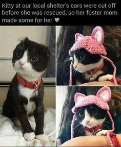 Cat Memes Of The Day 30 Pics – – Lovely Ani… Katzen Meme Des Tages 30 Bilder – – Schöne Tierwelt Funny Animal Memes, Cute Funny Animals, Funny Animal Pictures, Cute Baby Animals, Cat Memes, Funny Cute, Animals And Pets, Hilarious Pictures, Cute Kittens