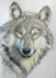 Image result for easy drawings of wolves in pencil