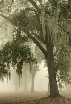 willows #Misty