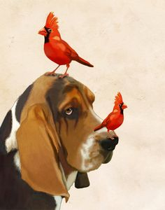 Basset Hound Red Cardinals 8X10 Art Print Acrylic by LoopyLolly