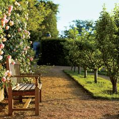 A teak bench stands next to climbing roses in one of Grand-Lucé's gardens; gravel paths wind around the pear trees.