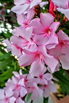 Catus, Flowering Trees, Wallis, Lily Of The Valley, Petunias, Daffodils, Pretty Flowers, Lilac, Natural Beauty