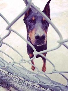 Buddy wants to play at SPCA Hamilton Dog Park - Hamilton, ON - Angus Off-Leash
