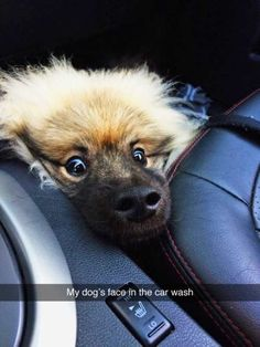 Hundreds of Funny and Adorable Dog Pictures, Dog Memes and yes Dog Shaming! It ends up that Man's Best Friend is as funny as they are loyal! Funny Animal Memes, Cute Funny Animals, Dog Memes, Funny Animal Pictures, Cute Baby Animals, Funny Cute, Dog Pictures, Funny Dogs, Funny Humor