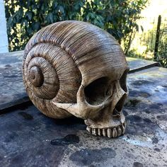 Skull, snail shell sculpture from Darlene the link no longer works but the sculpture is great. Sculpture Sur Os, Sculptures, Snail Shell, Human Skull, Bone Carving, Crystal Skull, Skull And Bones, Skull Art, Dark Art