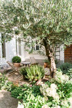 minimalis modern Unser Höfchen im HR Fernsehen Cozy Backyard, Backyard Landscaping, Back Gardens, Outdoor Gardens, Dream Garden, Home And Garden, Hydrangea Care, Different Plants, Garden Inspiration