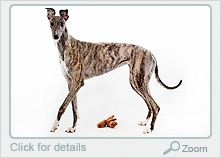 Brindled greyhounds are my absolute favorite!