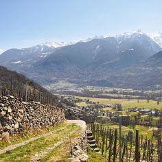 Vino vigneti e #Valtellina! #inlombardia365 sulle terrazze Nino Negri grande panorama e la primavera già si comincia a sentire! @in_lombardia @valtellinaofficial