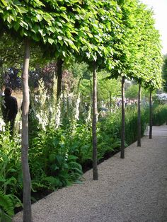 Claire Agnew's garden for Ruffer llp at Chelsea Photo:Karen Maskell Back Gardens, Small Gardens, Outdoor Gardens, Backyard Plan, Backyard Landscaping, Landscape Design, Garden Design, Espalier, Garden Hedges