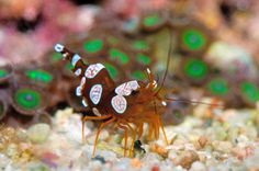 Sexy Shrimp!