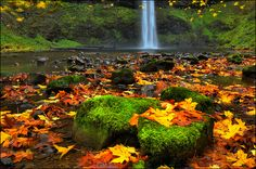 Silver Falls State Park South Falls with fall color,  Oregon State by Don Briggs, via Flickr. I love this time of year in Oregon!