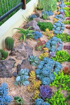Gorgeous planting pattern for succulents – 1 year after planting. Succulents and… Gorgeous planting pattern for succulents – 1 year after planting. Succulents and More: Revisiting Sue's succulent garden Pin: 305 x 447 Succulent Landscaping, Succulent Gardening, Planting Succulents, Backyard Landscaping, Succulent Plants, Landscaping Ideas, Cacti, Backyard Ideas, Succulent Rock Garden